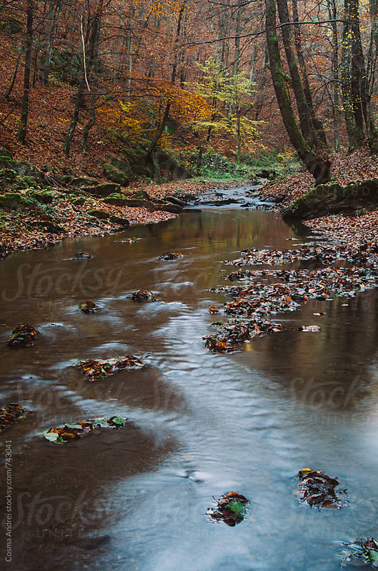 Autumn forest with river by Cosma Andrei for Stocksy United