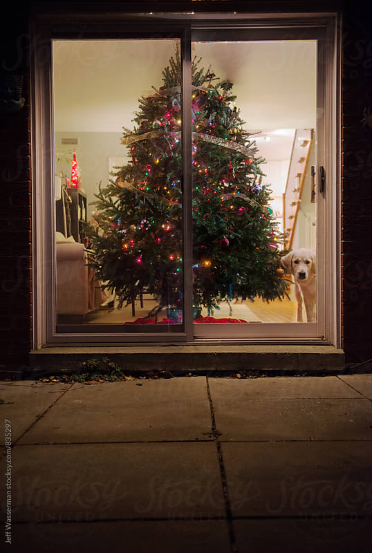 Christmas Tree and Dog at Night by Jeff Wasserman for Stocksy United