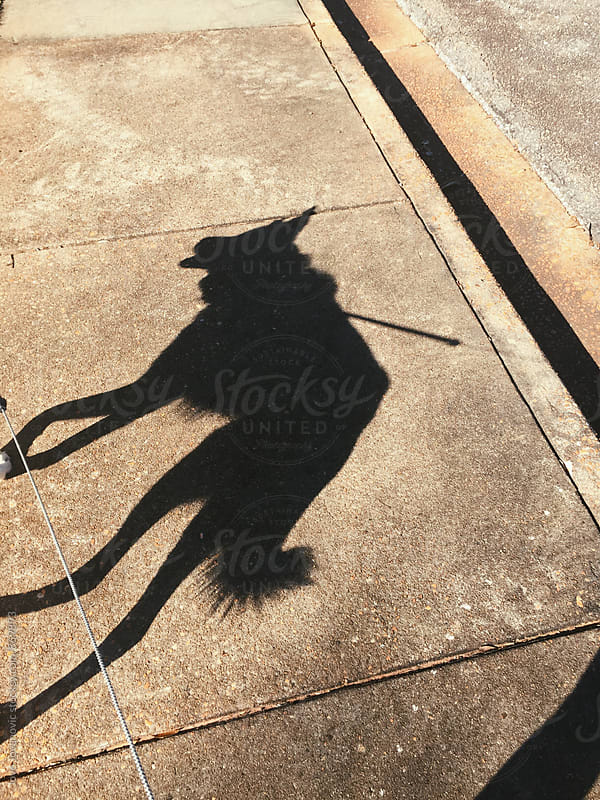 Shadow of a big dog on a leash walking on the sidewalk  by Jovo Jovanovic for Stocksy United