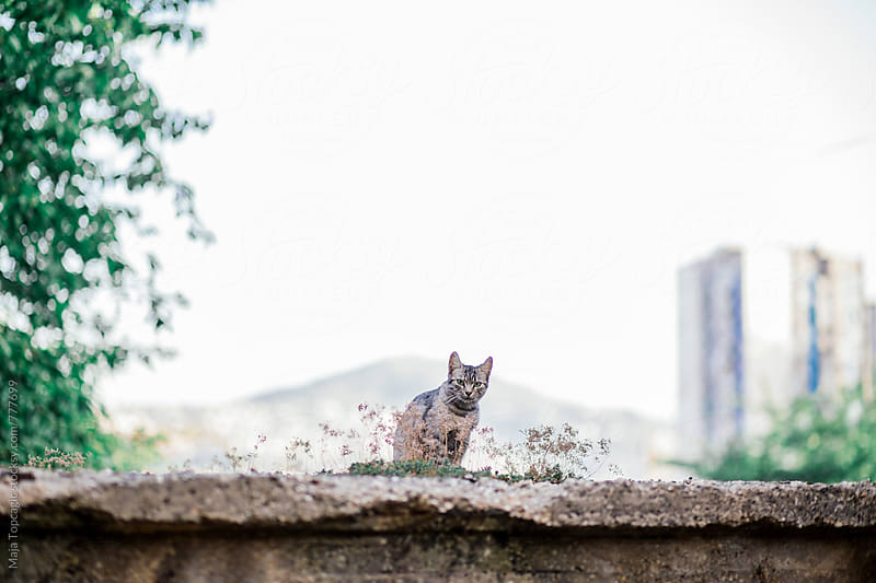 Small kitten sitting on a wall by Maja Topcagic for Stocksy United