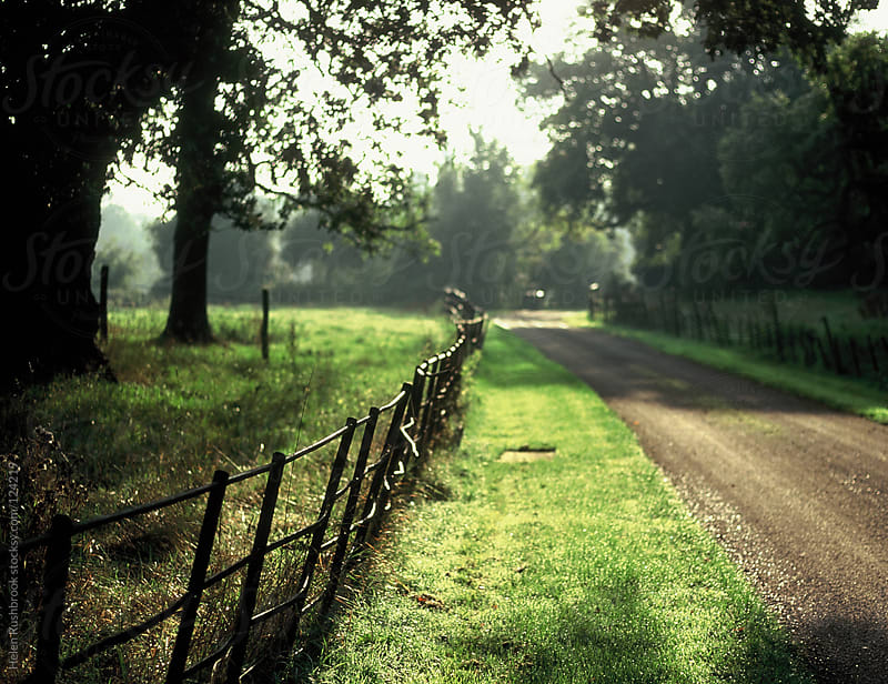 Estate fencing and a sunlit country lane by Helen Rushbrook for Stocksy United
