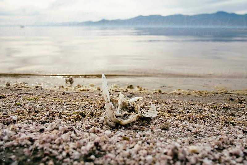 Fish carcass at Salton Sea by Oscar Lopez for Stocksy United