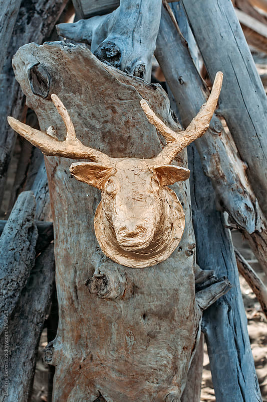 Deer head hanging on a wooden wall on the beach by Beatrix Boros for Stocksy United