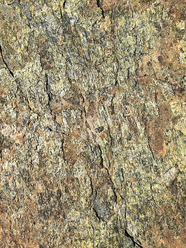 Detail of patterns on rock, Central Cascades, WA by Paul Edmondson for Stocksy United