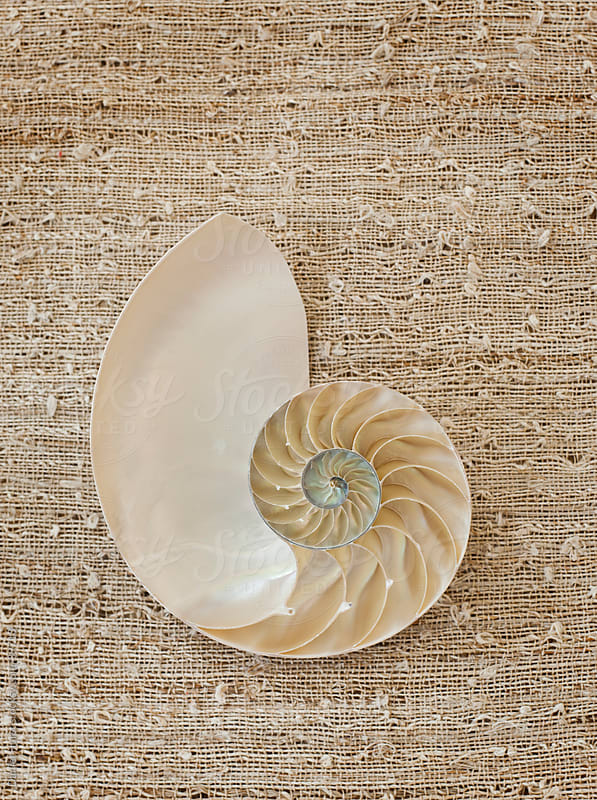 Natilus Shell by Daniel Hurst for Stocksy United