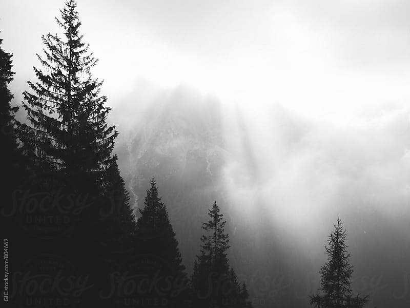 Mountain Forest  by WAVE for Stocksy United