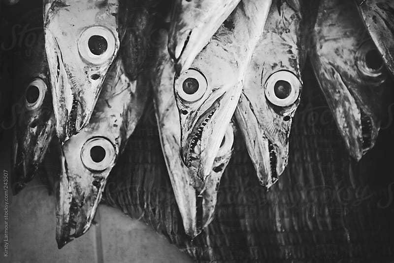 Fish for sale in a market by Kirsty Larmour for Stocksy United