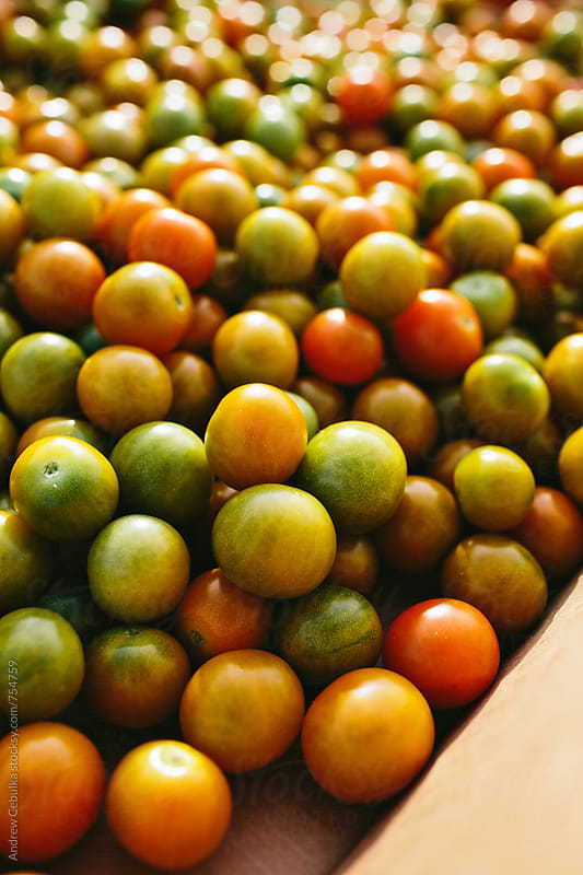 Johns Island Green Tomatoes  by Andrew Cebulka for Stocksy United