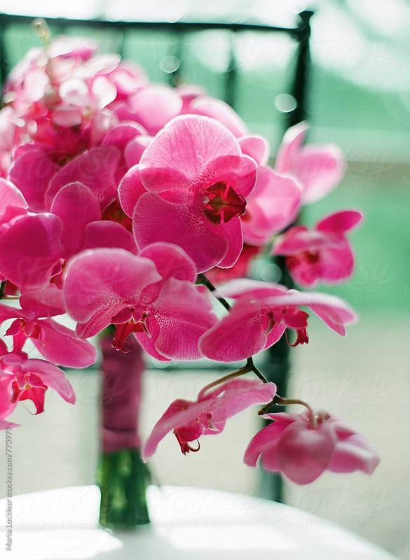 Fushcia Orchid Bouquet by Marta Locklear for Stocksy United