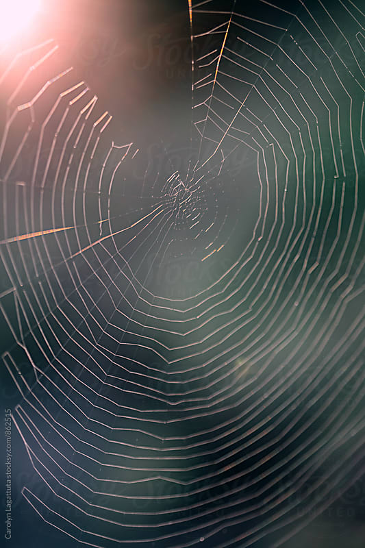 Spider web with a green background and the sun shining behind it by Carolyn Lagattuta for Stocksy United
