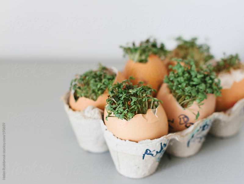Cress-heads by Helen Rushbrook for Stocksy United