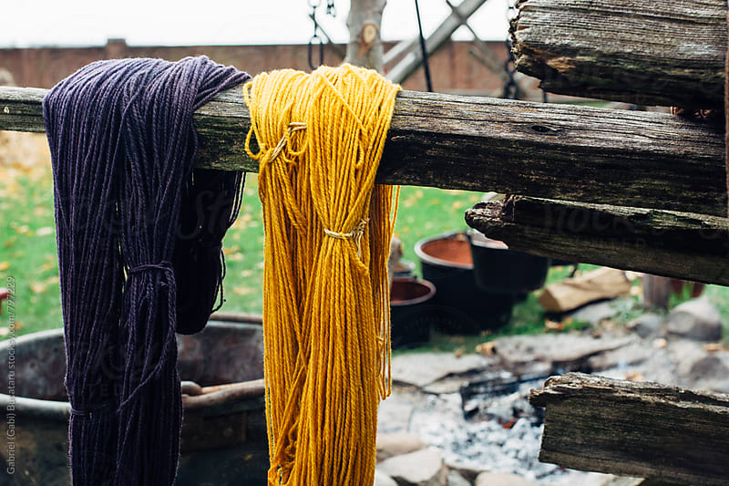 Purlpe and yellow dyed wool drying on a fence by Gabriel (Gabi) Bucataru for Stocksy United