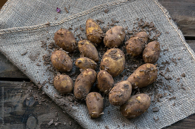 Potatoes freshly harvested lying on a hessian sack by Paul Phillips for Stocksy United