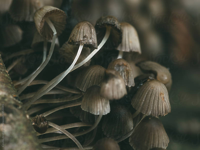 Wild mushrooms by Cosma Andrei for Stocksy United