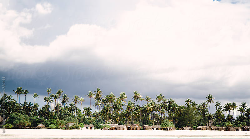 Palm trees and palm thatched huts lining a Zanzibar beach.  by Helen Rushbrook for Stocksy United