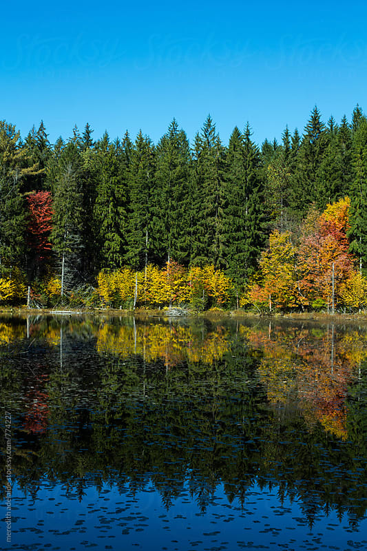 Beautiful Natural Reflection of Colorful Trees on Autumn October Lake by meredith adelaide for Stocksy United