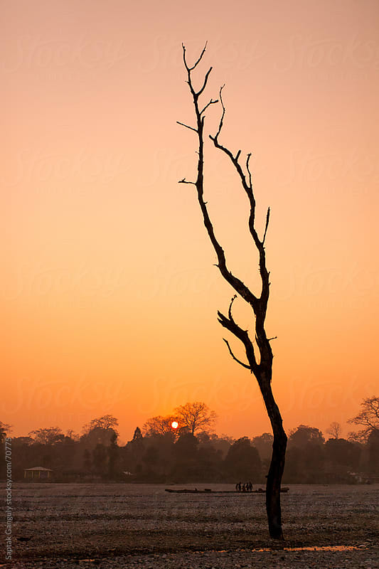 Barren tree at sunset by Saptak Ganguly for Stocksy United