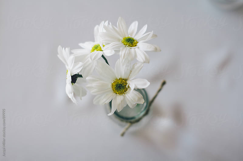 White flowers in a small vase by Jacqui Miller for Stocksy United