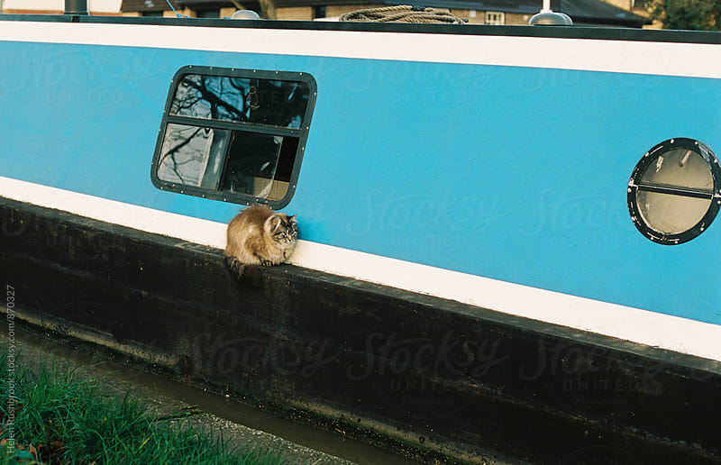 A cat sitting on the side of a narrowboat by Helen Rushbrook for Stocksy United