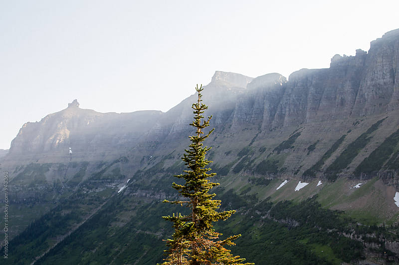 Lone Tree in Logans Pass by Kristopher Orr for Stocksy United