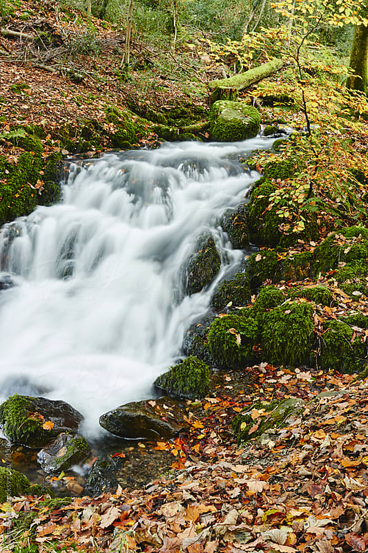 Waterfall and autumnal woodland. Cumbria, UK. by Liam Grant for Stocksy United