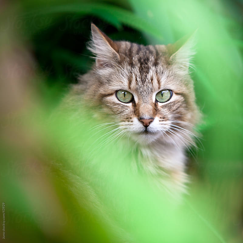 Cat in the grass by Micky Wiswedel for Stocksy United