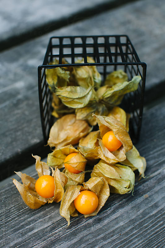 Physalis by Zocky for Stocksy United