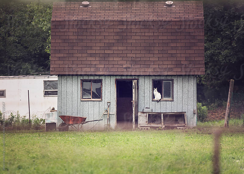 Old barn with a white cat sitting serenely in the window by anya brewley schultheiss for Stocksy United