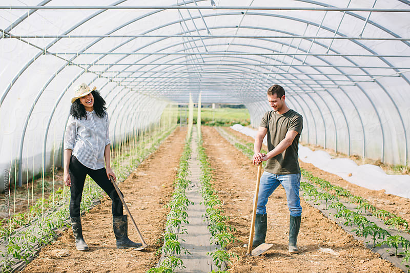 Farmers couple working in a big greenhouse. by BONNINSTUDIO for Stocksy United