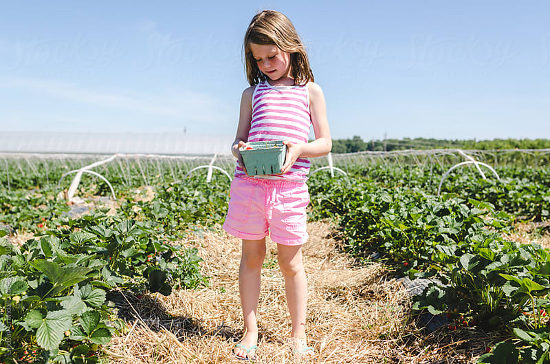 Girl standing in field of strawberries holding basket by Lindsay Crandall for Stocksy United