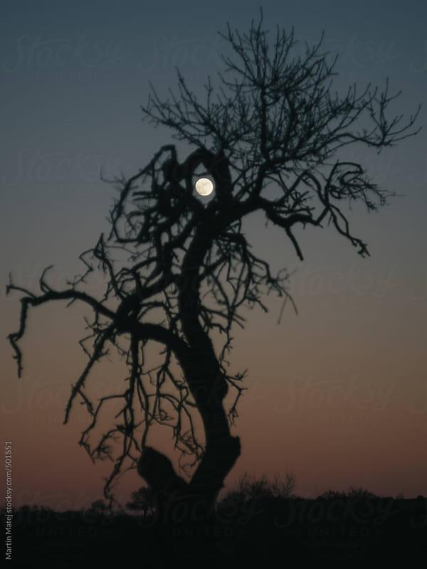 Full moon framed inside a tree  by Martin Matej for Stocksy United