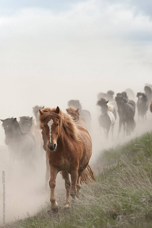 Icelandic Horses by Anthon Jackson for Stocksy United