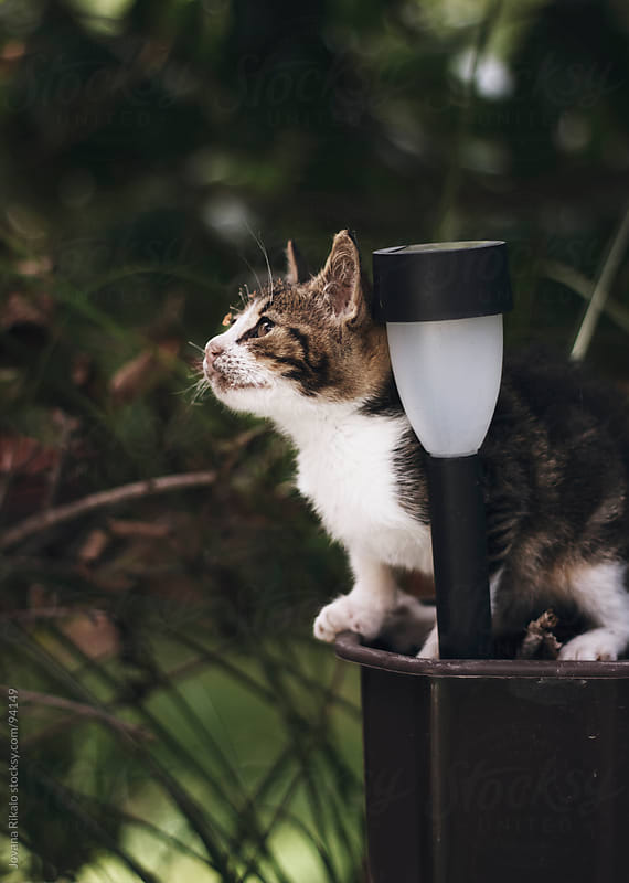 Baby cat  in a flowerpot by Jovana Rikalo for Stocksy United