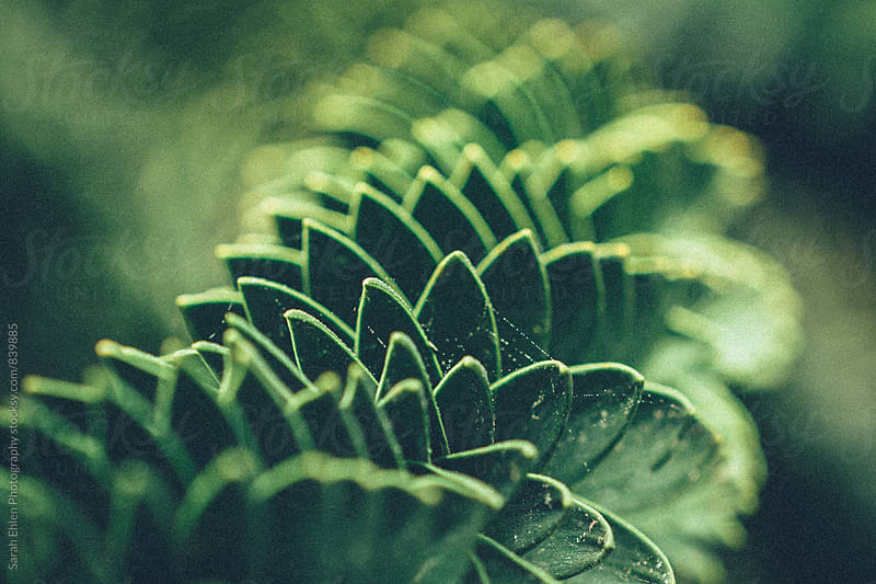 Abstract pattern in green plant leaves. by Sarah Ehlen Photography for Stocksy United