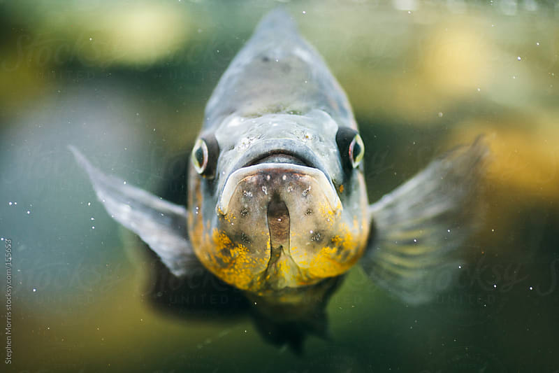 Fish Close-up by Stephen Morris for Stocksy United