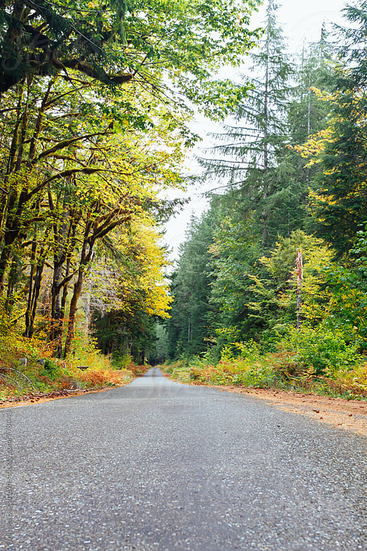 Forested road with fall foliage tree cover by Mihael Blikshteyn for Stocksy United