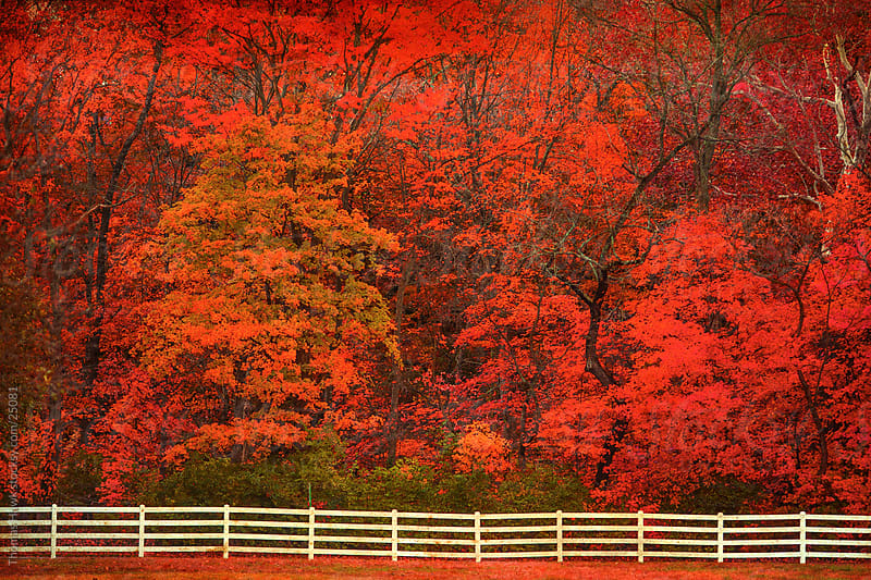 Fall Colors by Thomas Hawk for Stocksy United