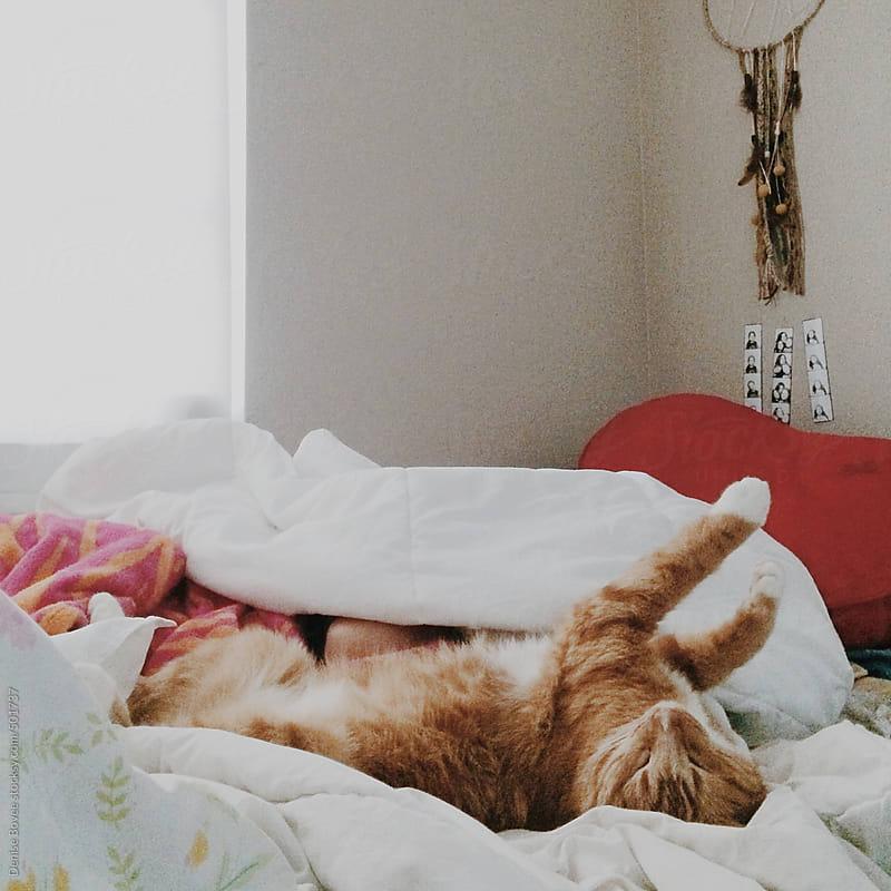 Orange Tabby Cat Sleeping on Back by Denise Bovee for Stocksy United