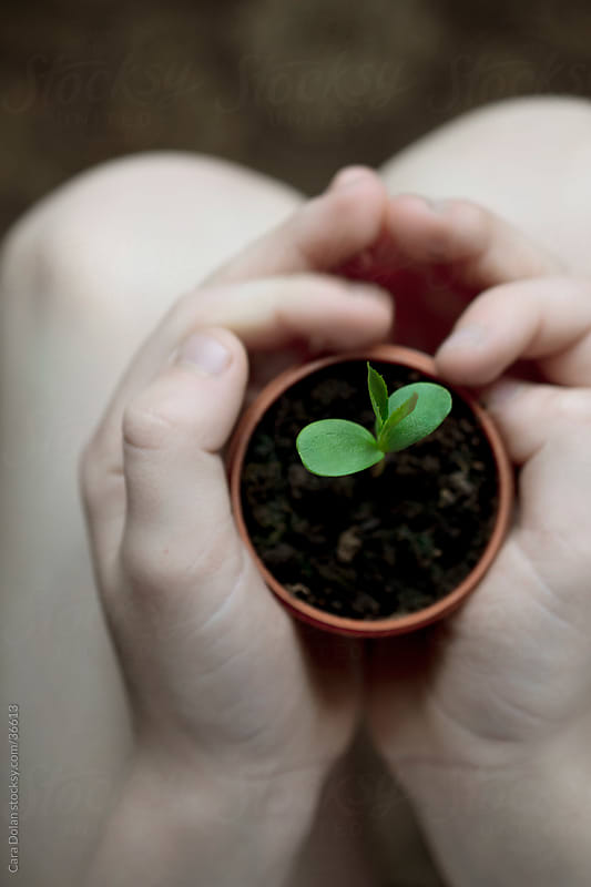 Child's hands protect new green seedling by Cara Slifka for Stocksy United