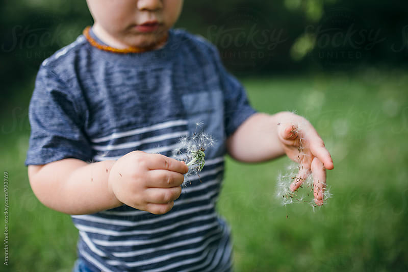 Cropped View of a Little Boy with Dandelions by Amanda Voelker for Stocksy United