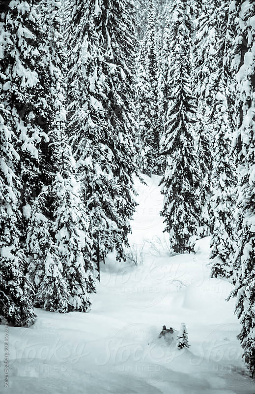 Man tree skiing powder snow in winter mountains of Rogers Pass, British Columbia. by Soren Egeberg for Stocksy United