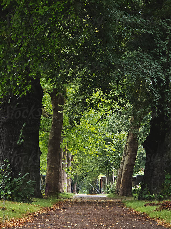 Alley of trees at a local cemetery by Melanie Kintz for Stocksy United
