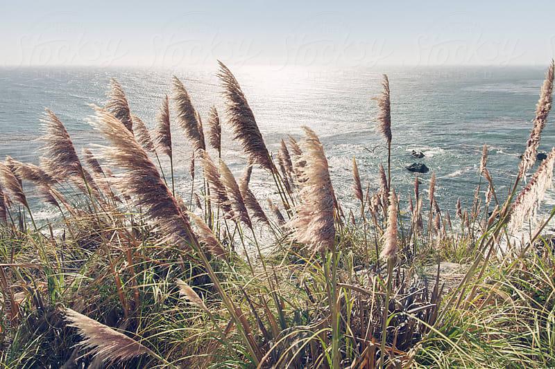 Reed, Wind & Ocean by VISUALSPECTRUM for Stocksy United