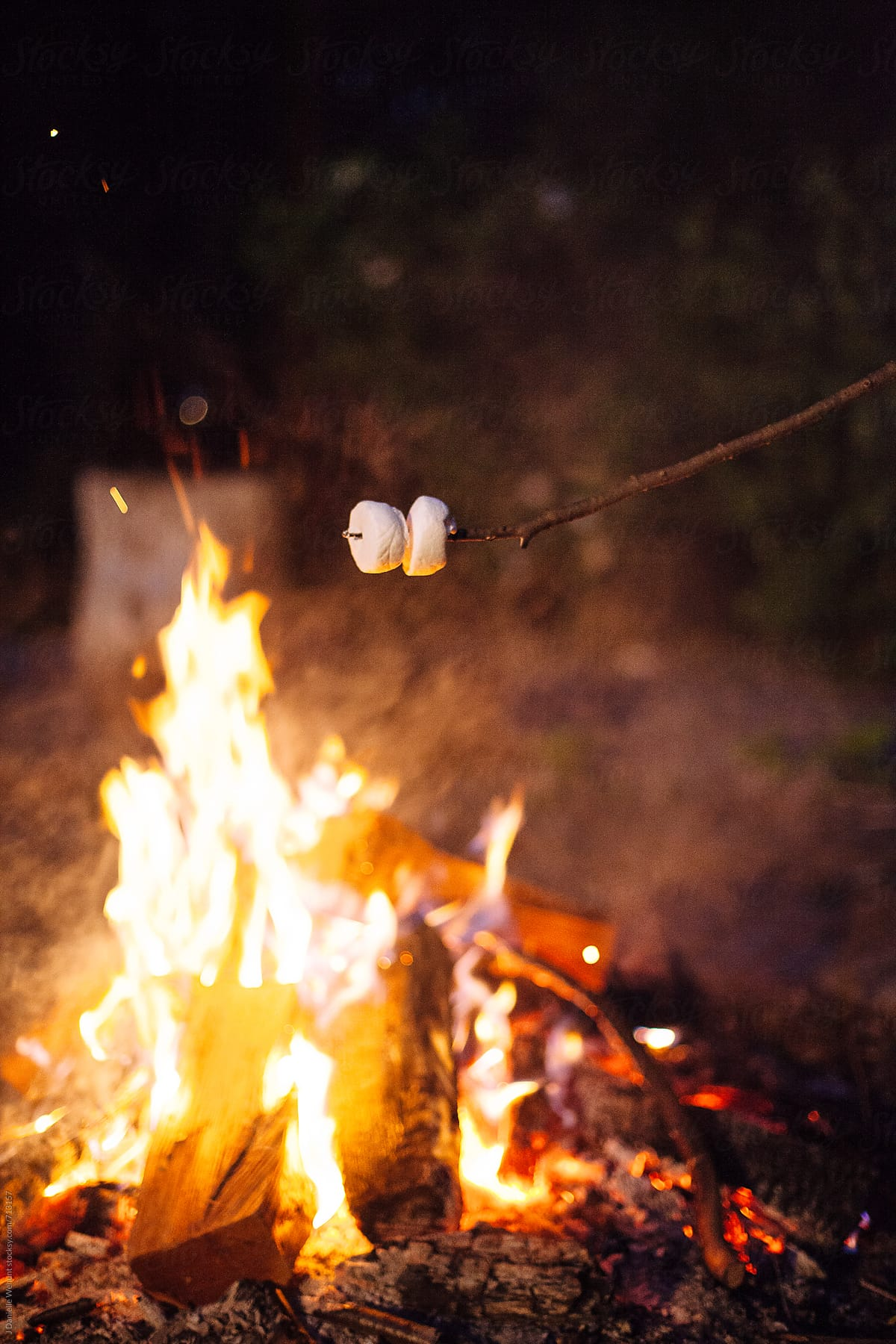 marshmallows roasting over an open fire stocksy united
