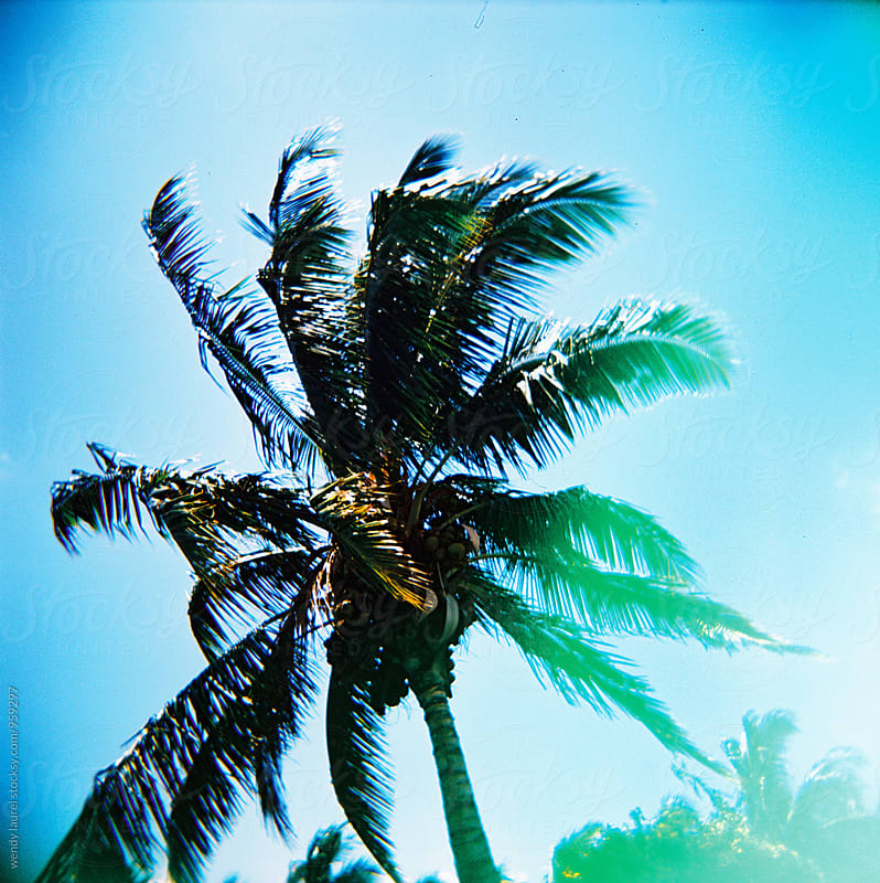 cross processed film of palm tree against bright blue sky by wendy laurel for Stocksy United