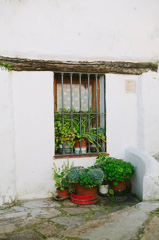 Andalucian house window decorated with potted plants by kkgas for Stocksy United