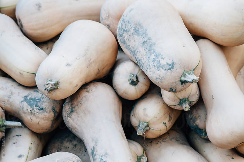 fresh harvested butternut squash background by Deirdre Malfatto for Stocksy United