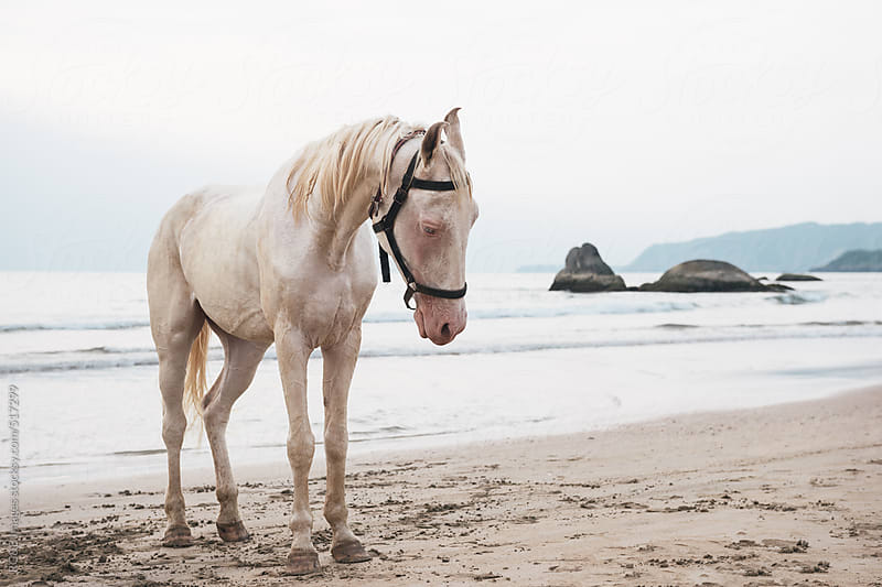 lonely white horse standing on the beach  by RG&B Images for Stocksy United