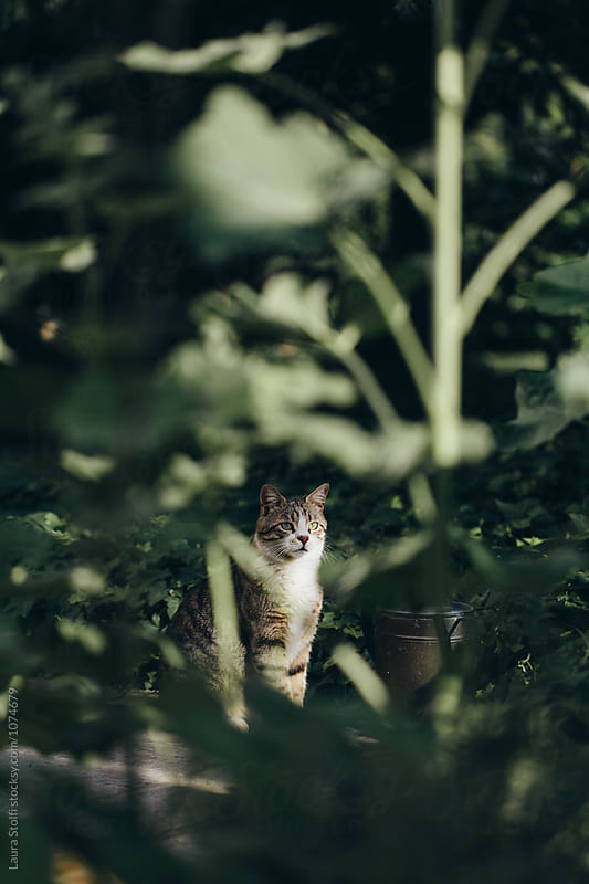 Cat relaxing in garden amongst plants by Laura Stolfi for Stocksy United