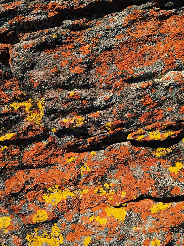 Red and Yellow Moss Growing on Stone by VISUALSPECTRUM for Stocksy United